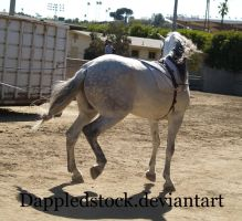 Andalusian 09 by dappledstock