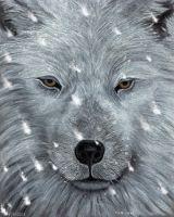 The Amber Eyed Wolf by PhilipHarvey