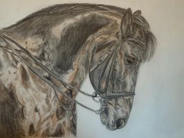 Coloured Pencil Horse by maja135able