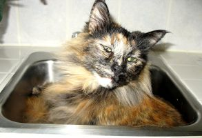 in sink kitty 2 by uberbechin