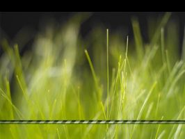 Windows Vista Grass by docmiller