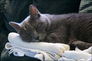 Guarding the towels - May 2009 by pearwood