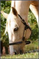 Graze at an Angle by Phantom303