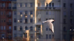 Gulls among humans 2 by Skyrover