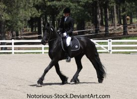 Dressage 002 by Notorious-Stock