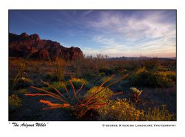 The Arizona Wilds by gwrhino