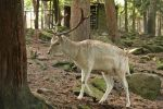 Deer Stock 31 by Malleni-Stock