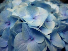 Only the Beauty of Blue by CharlottesPhotos