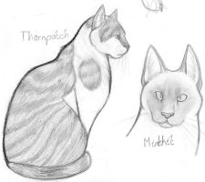 Two Warrior Cats by Stoataggedon