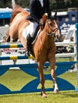 Jumping stock 10 by Kennelwood-Stock