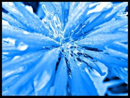 Ice Flower by blu-graphix