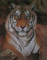 Tiger in Pastel by Asiri57