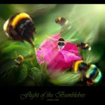 Flight of the Bumblebee by inObrAS