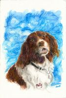 polly the spaniel by fi-j