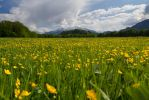 Hohe Goell - Spring View by cluster5020