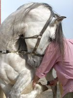 Andalusian by Nefer4