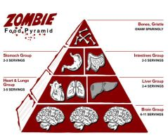 Zombie Food chain by CaptainMyotis