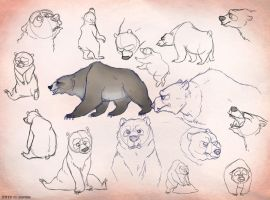 Bear sketches by Zerda-Fox