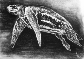 Monthy Challenge: Sea Turtle by KigerwolfRD