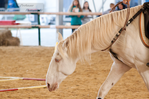 Cremello Lusitano_22 by CalyHoney