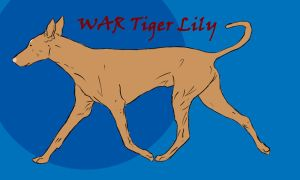 WAR Tiger Lily by Wild-Animal-Reserve