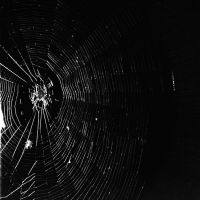 spiderweb by ncavee