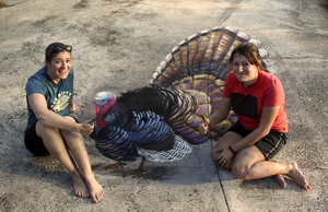 3D Turkey Chalk Art in perspective by charfade