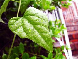 Green Leaf I by looking-for-hope