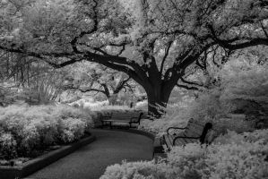 Trees, Benches and a Flower 4 by Kstevensx