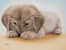 Dog tired by ADRIANSportraits