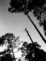 the wire trees by digitaltvirus