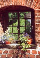 Old window with flowers by krynia