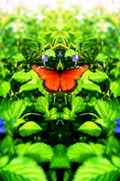 Butterfly Landing by OtherWorldyImages