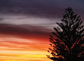 Pine in the Rainbow by SaphoPhotographics