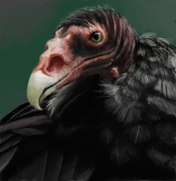 Vulture by ahobaga