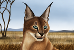 Caracal by Takas15