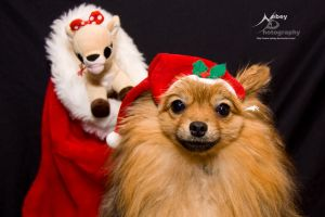 Merry Christmas Pomeranian 3 by Nebey