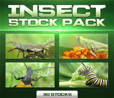 Insect Stock Pack by krazekay