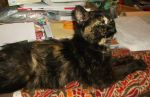 Sophie poses in Mommy's work area by MystMoonstruck