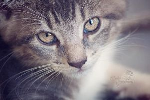 Crazy Kitty by CandiceSmithPhoto