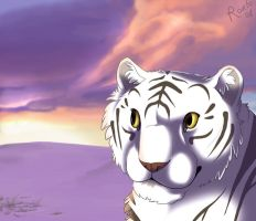Tiger sunset by Ronto