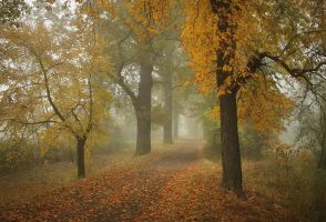 foggy autumn I by vlastas