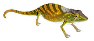 Gecko 001 - Clear Cut PNG by Travail-de-lame