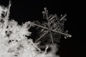 Snow Flake by Alliec