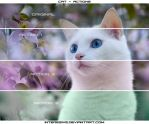 Cat - Actions by interesive
