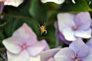 Insy Winsy Spider by Chihito