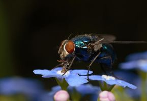 Fly on Flowers by Alliec