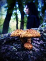 Mushrooms... by Juliana-Mierzejewska