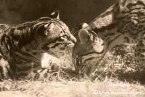 Ocelots by that-fox
