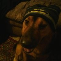 Friends dog with batman hat by 3Rockstar3